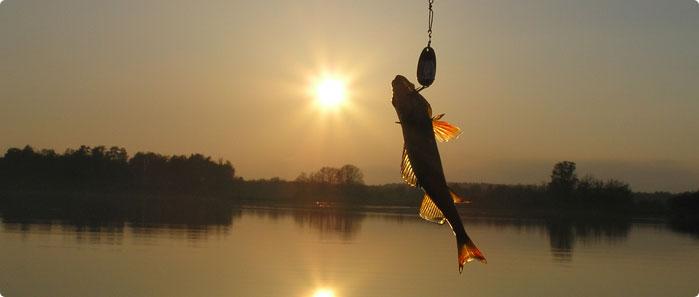 Fiska på sommaren